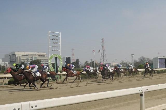園田 競馬 日程